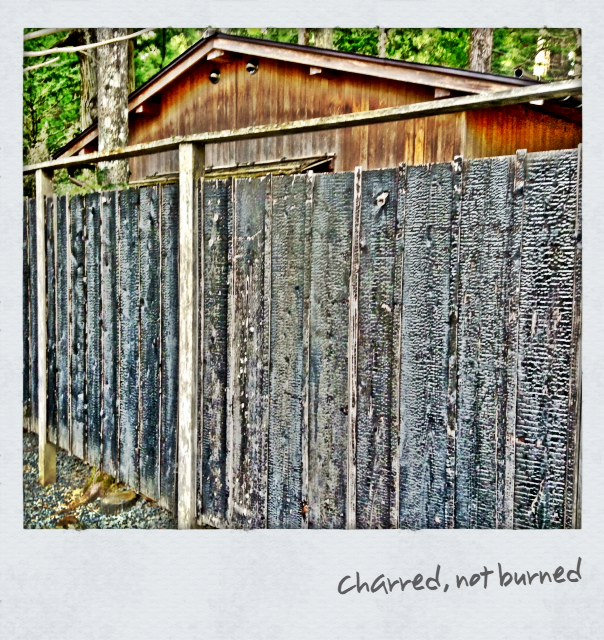 Charred Fence
