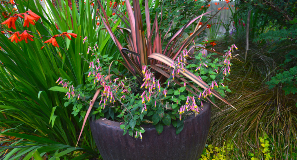 Tune-up Summer Pots with Seasonal Color