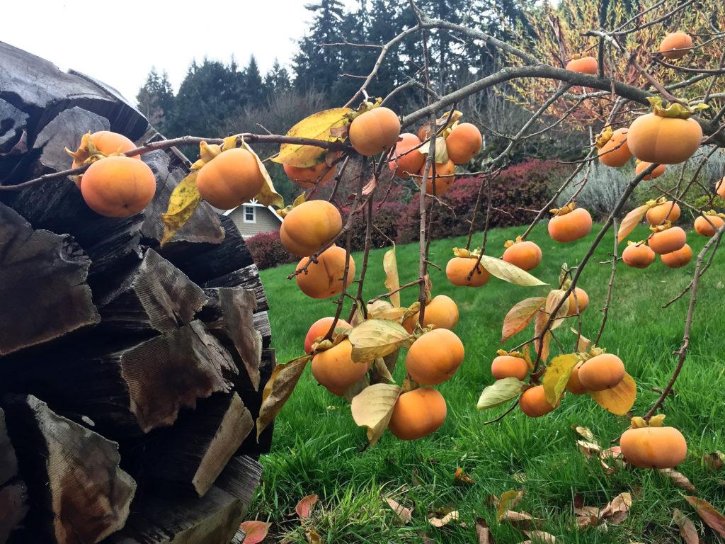 Orange Fruits of Fall