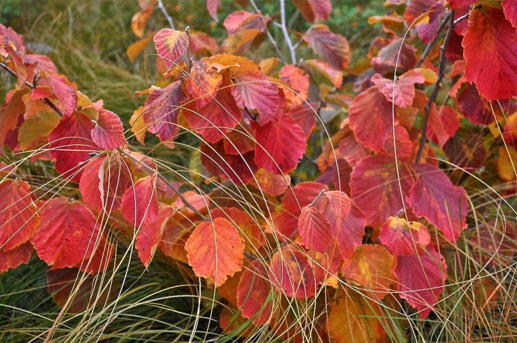 Design for Autumn Foliage