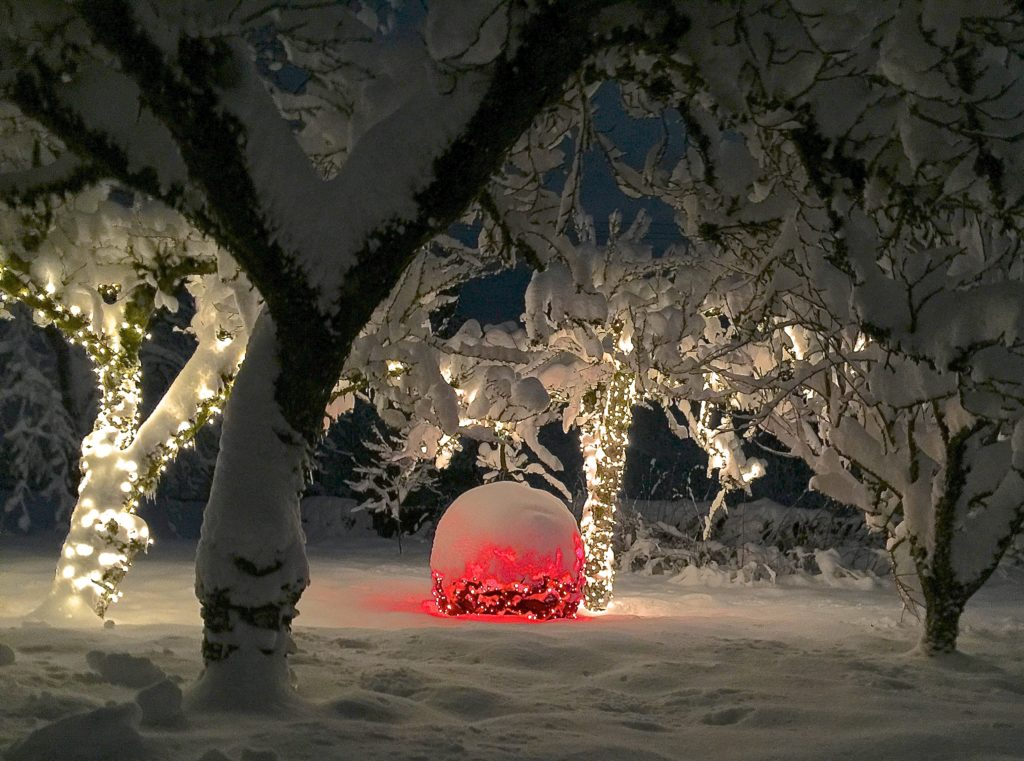 Red Fires Up the Winter Garden...click pic to read!